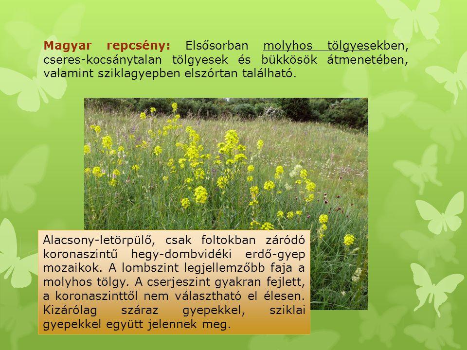 Magyar repcsény: Elsősorban molyhos tölgyesekben, cseres-kocsánytalan tölgyesek és bükkösök átmenetében, valamint sziklagyepben elszórtan található.