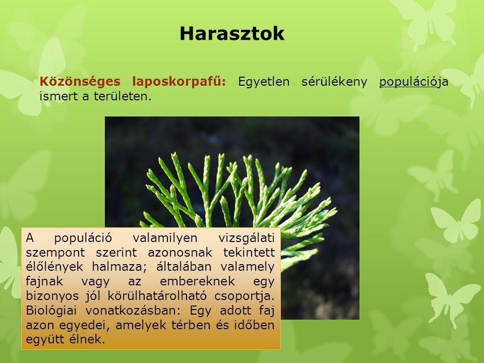 Harasztok Közönséges laposkorpafű: Egyetlen sérülékeny populációja ismert a területen.