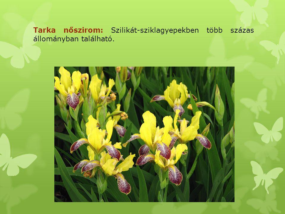 Tarka nőszirom: Szilikát-sziklagyepekben több százas állományban található.