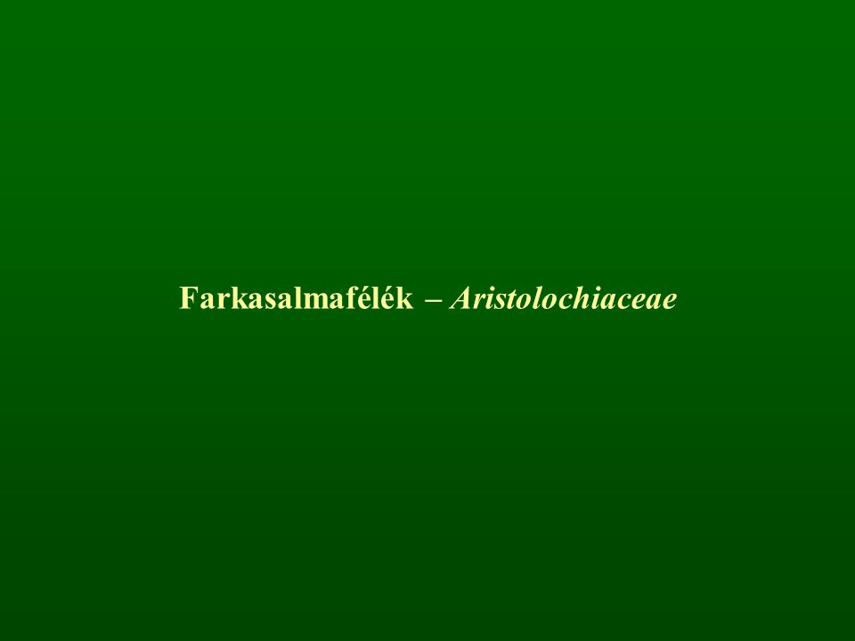 Farkasalmafélék – Aristolochiaceae