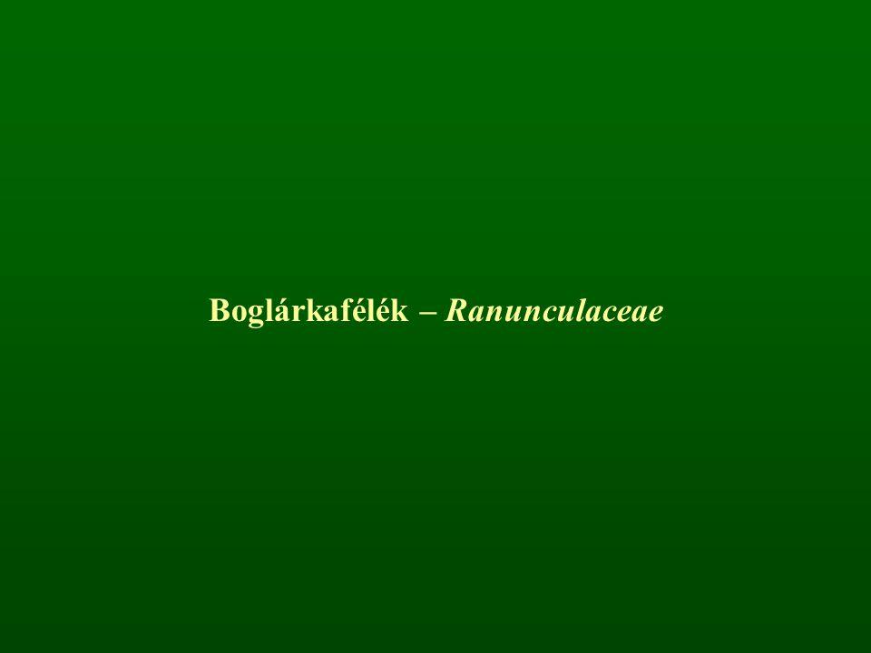 Boglárkafélék – Ranunculaceae