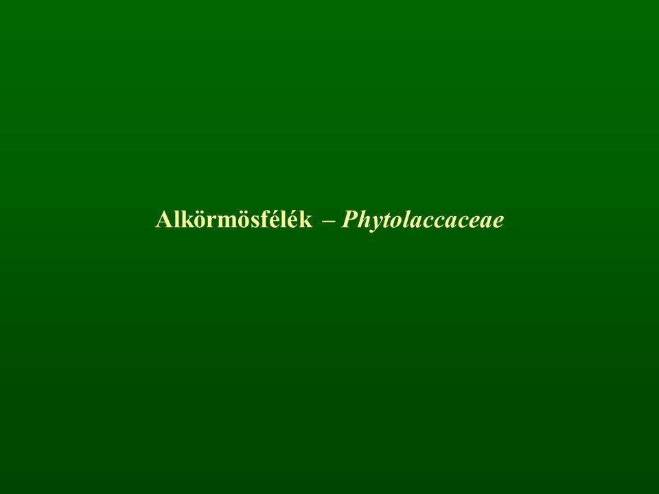 Alkörmösfélék – Phytolaccaceae