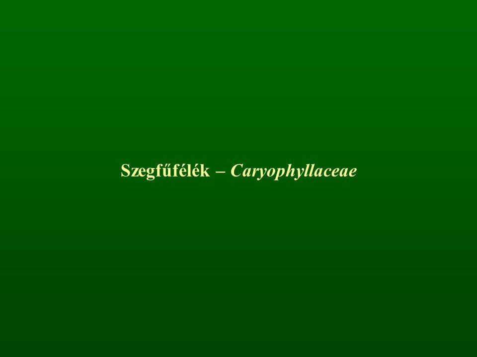 Szegfűfélék – Caryophyllaceae