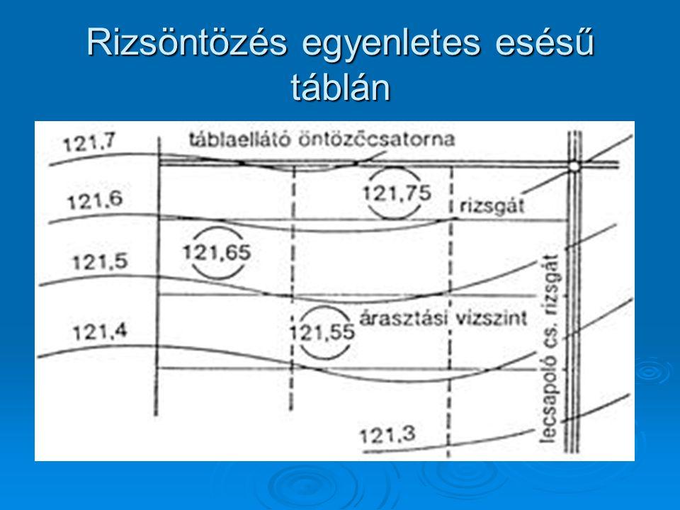Rizsöntözés egyenletes esésű táblán