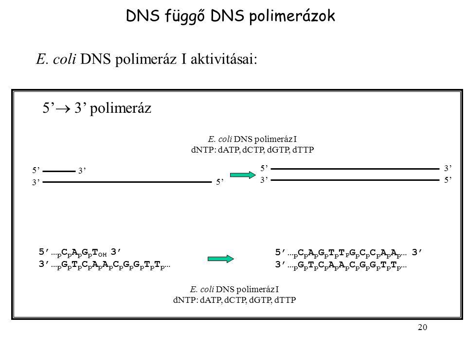 dNTP: dATP, dCTP, dGTP, dTTP
