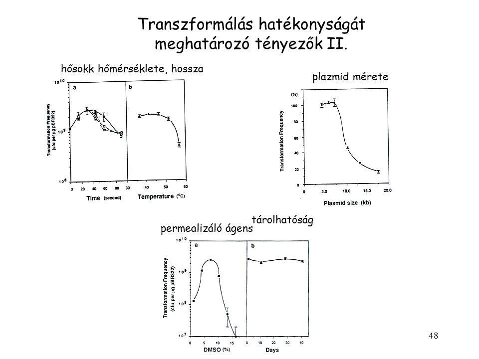 Transzformálás hatékonyságát meghatározó tényezők II.