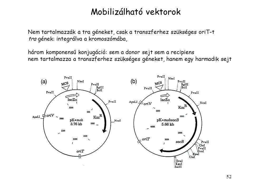Mobilizálható vektorok
