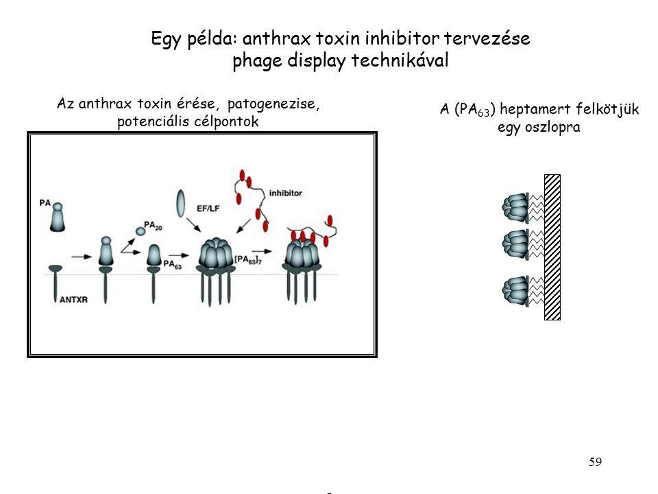 Egy példa: anthrax toxin inhibitor tervezése phage display technikával