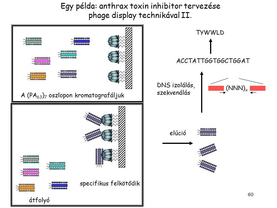 Egy példa: anthrax toxin inhibitor tervezése phage display technikával II.