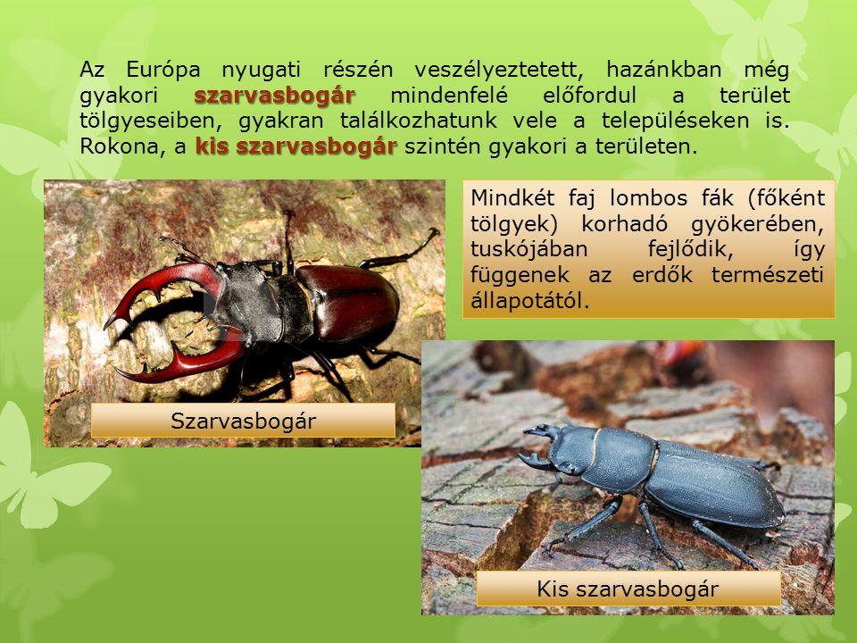 Az Európa nyugati részén veszélyeztetett, hazánkban még gyakori szarvasbogár mindenfelé előfordul a terület tölgyeseiben, gyakran találkozhatunk vele a településeken is. Rokona, a kis szarvasbogár szintén gyakori a területen.