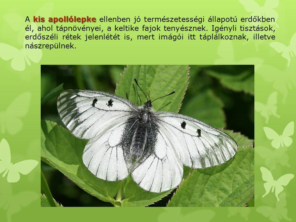 A kis apollólepke ellenben jó természetességi állapotú erdőkben él, ahol tápnövényei, a keltike fajok tenyésznek.