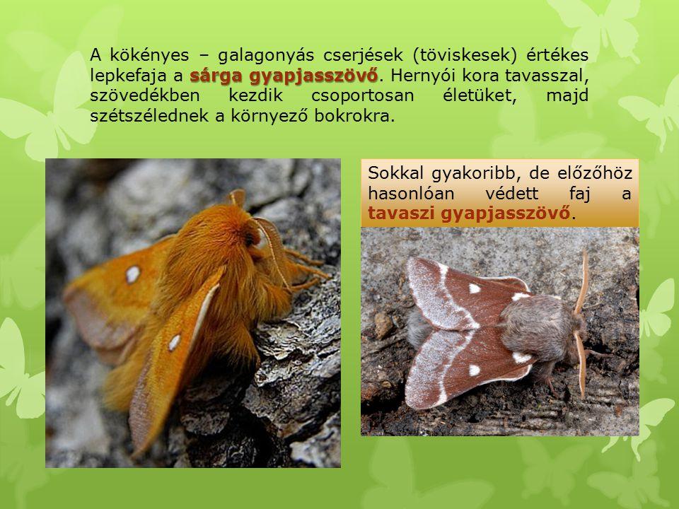 A kökényes – galagonyás cserjések (töviskesek) értékes lepkefaja a sárga gyapjasszövő. Hernyói kora tavasszal, szövedékben kezdik csoportosan életüket, majd szétszélednek a környező bokrokra.