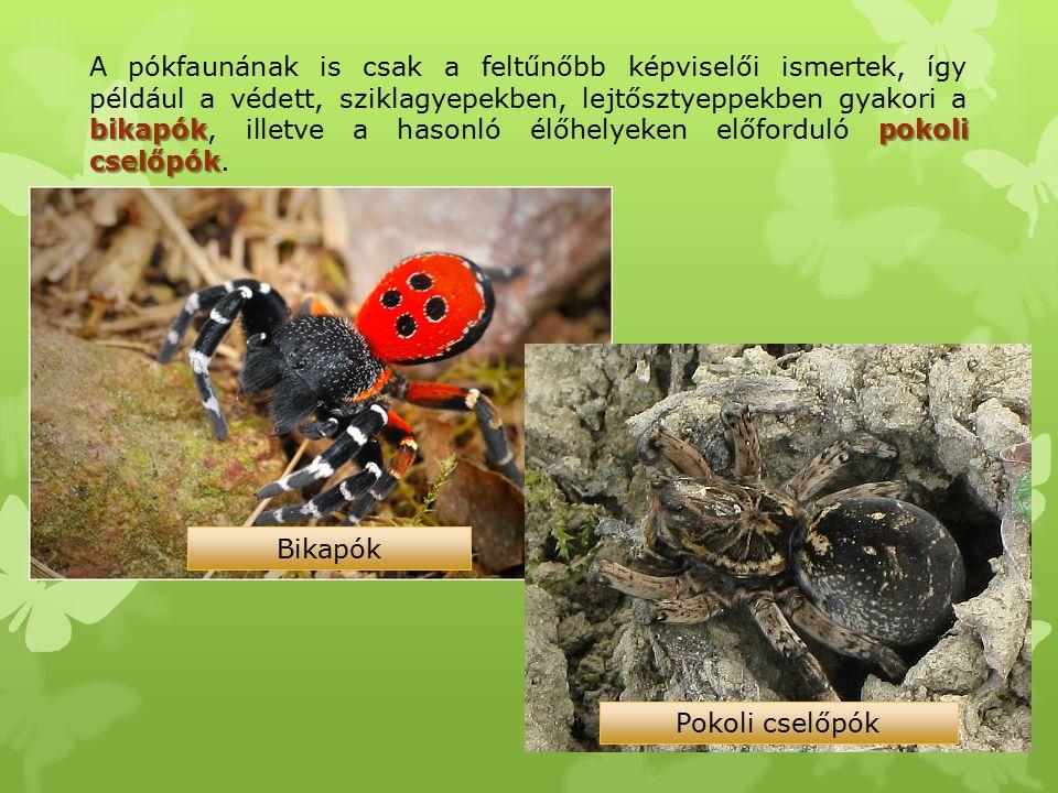 A pókfaunának is csak a feltűnőbb képviselői ismertek, így például a védett, sziklagyepekben, lejtősztyeppekben gyakori a bikapók, illetve a hasonló élőhelyeken előforduló pokoli cselőpók.