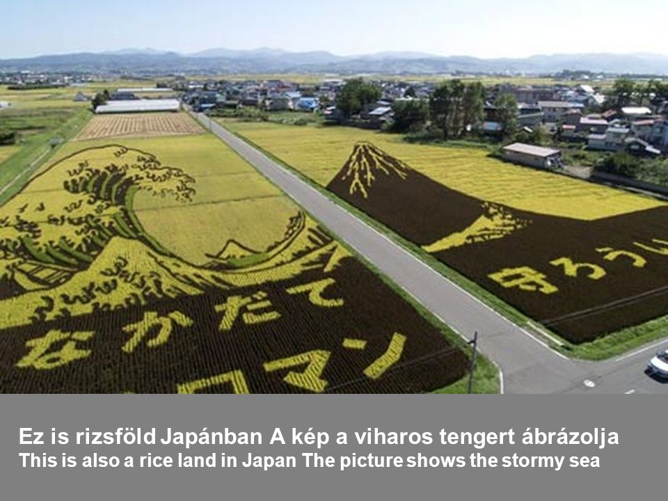 Ez is rizsföld Japánban A kép a viharos tengert ábrázolja