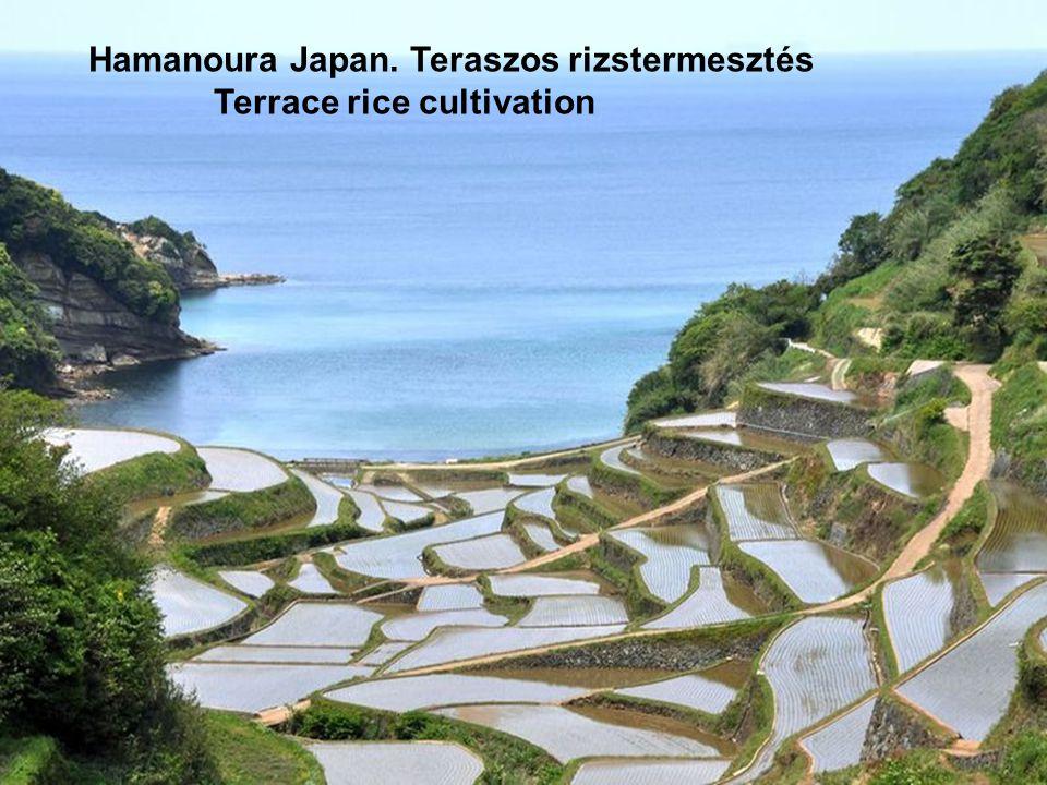 Hamanoura Japan. Teraszos rizstermesztés