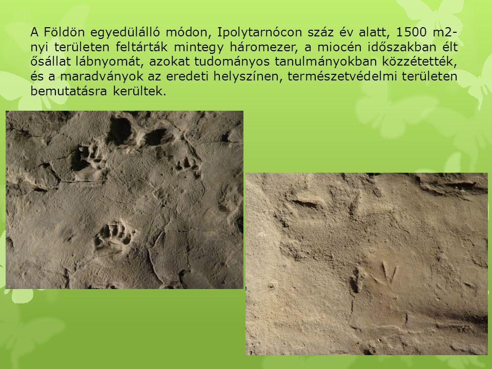 A Földön egyedülálló módon, Ipolytarnócon száz év alatt, 1500 m2-nyi területen feltárták mintegy háromezer, a miocén időszakban élt ősállat lábnyomát, azokat tudományos tanulmányokban közzétették, és a maradványok az eredeti helyszínen, természetvédelmi területen bemutatásra kerültek.