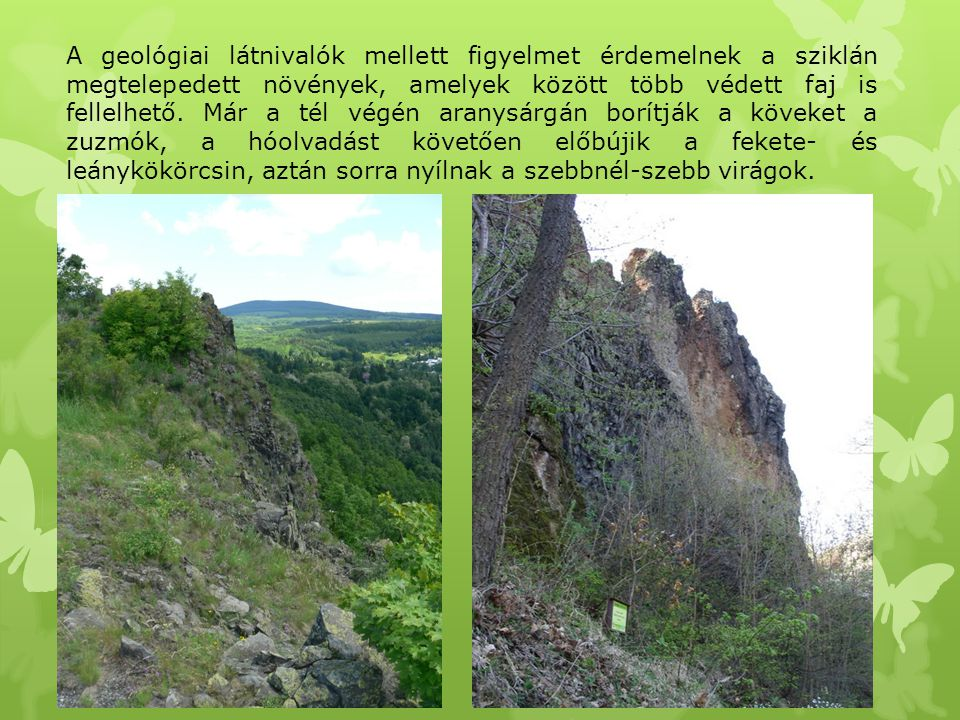 A geológiai látnivalók mellett figyelmet érdemelnek a sziklán megtelepedett növények, amelyek között több védett faj is fellelhető.