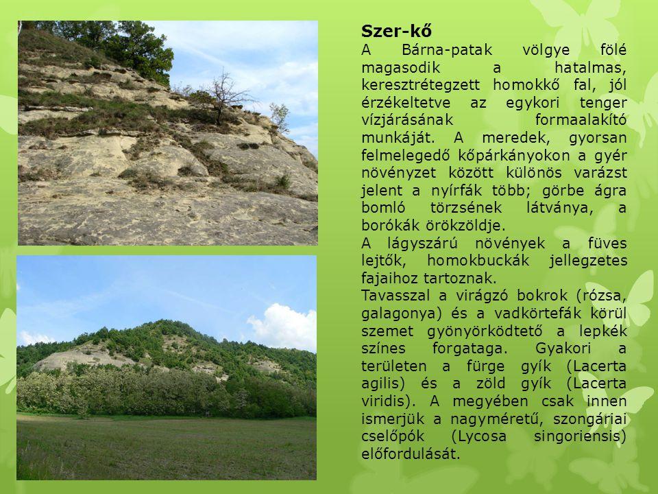 Szer-kő