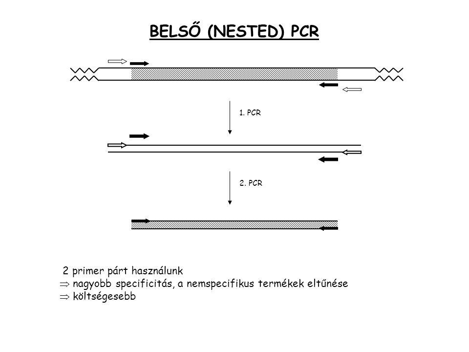 BELSŐ (NESTED) PCR 1. PCR. 2. PCR. 2 primer párt használunk  nagyobb specificitás, a nemspecifikus termékek eltűnése.