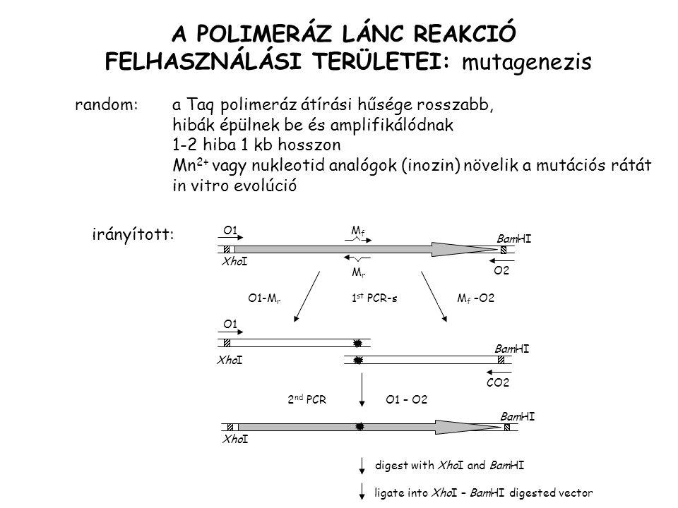A POLIMERÁZ LÁNC REAKCIÓ FELHASZNÁLÁSI TERÜLETEI: mutagenezis