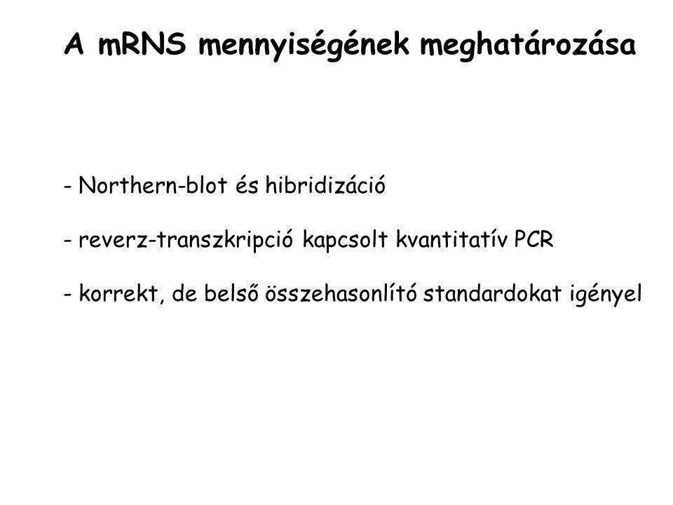 A mRNS mennyiségének meghatározása