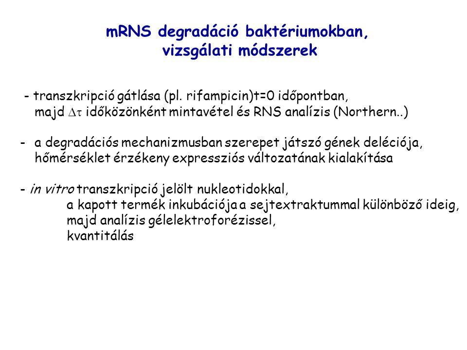 mRNS degradáció baktériumokban,