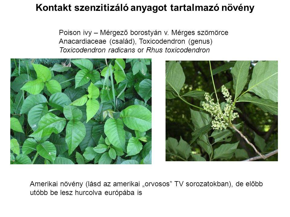 Kontakt szenzitizáló anyagot tartalmazó növény