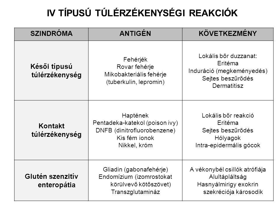 IV TÍPUSÚ TÚLÉRZÉKENYSÉGI REAKCIÓK