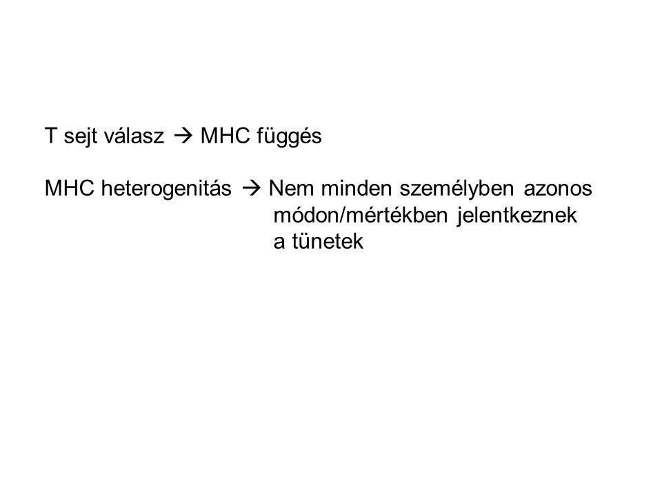 T sejt válasz  MHC függés