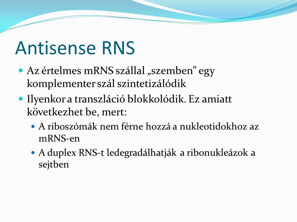 """Antisense RNS Az értelmes mRNS szállal """"szemben egy komplementer szál szintetizálódik."""