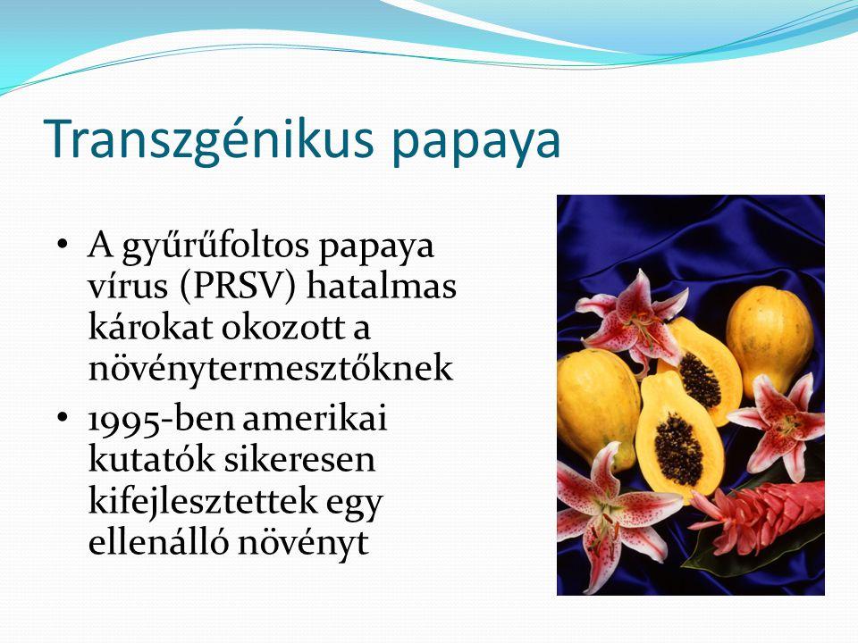 Transzgénikus papaya A gyűrűfoltos papaya vírus (PRSV) hatalmas károkat okozott a növénytermesztőknek.