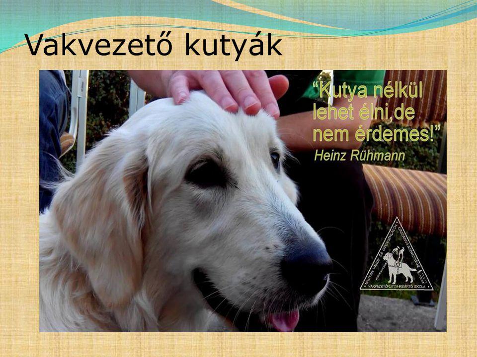 Vakvezető kutyák