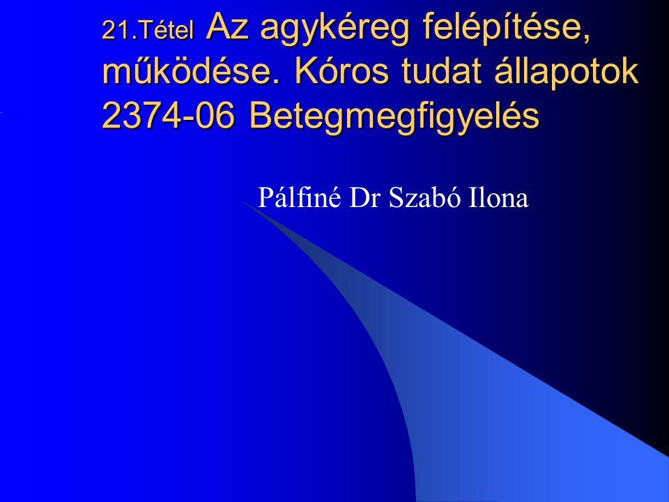 21. Tétel Az agykéreg felépítése, működése
