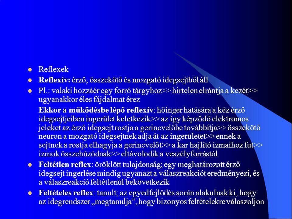 Reflexek Reflexív: érző, összekötő és mozgató idegsejtből áll.