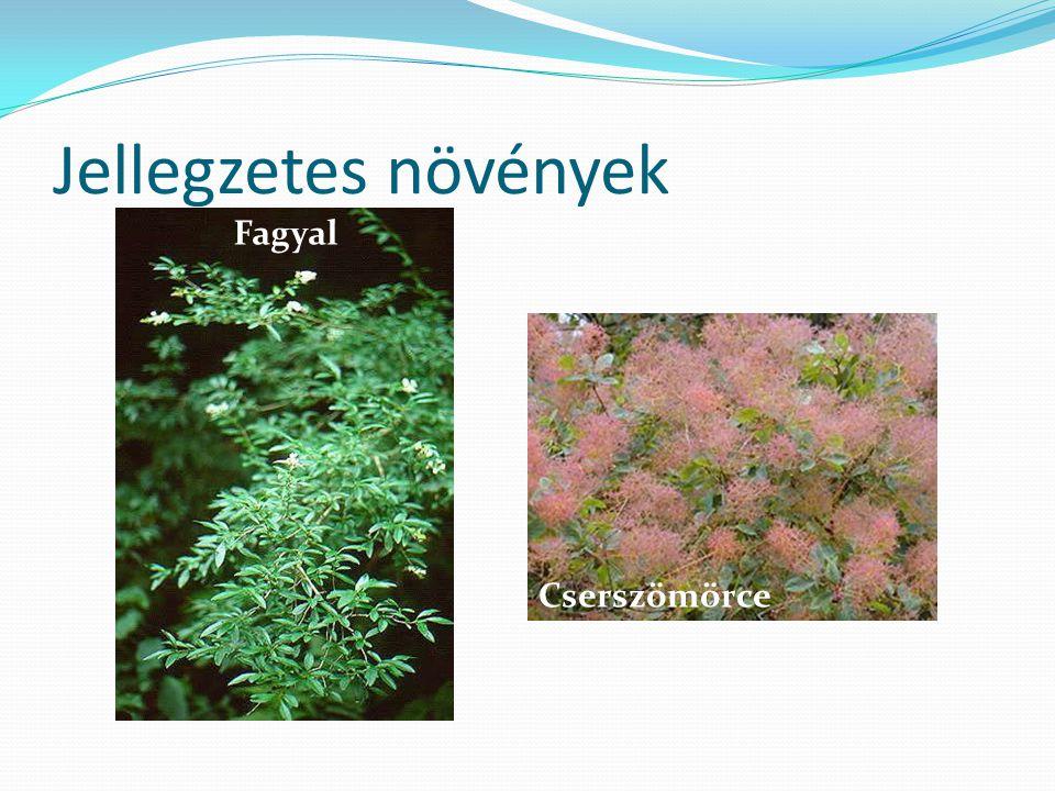 Jellegzetes növények Fagyal Cserszömörce