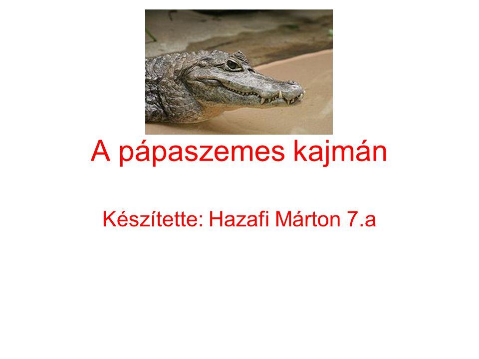 Készítette: Hazafi Márton 7.a
