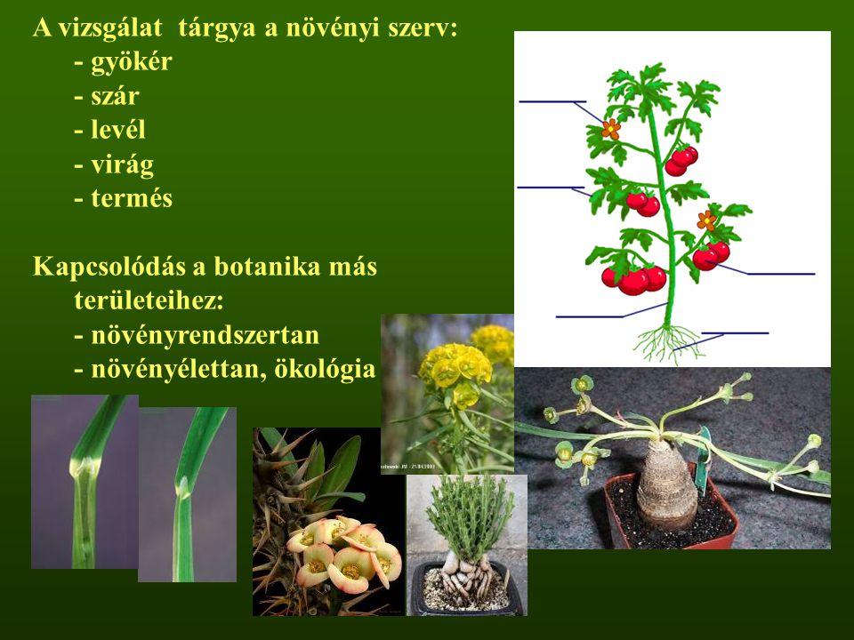 A vizsgálat tárgya a növényi szerv: