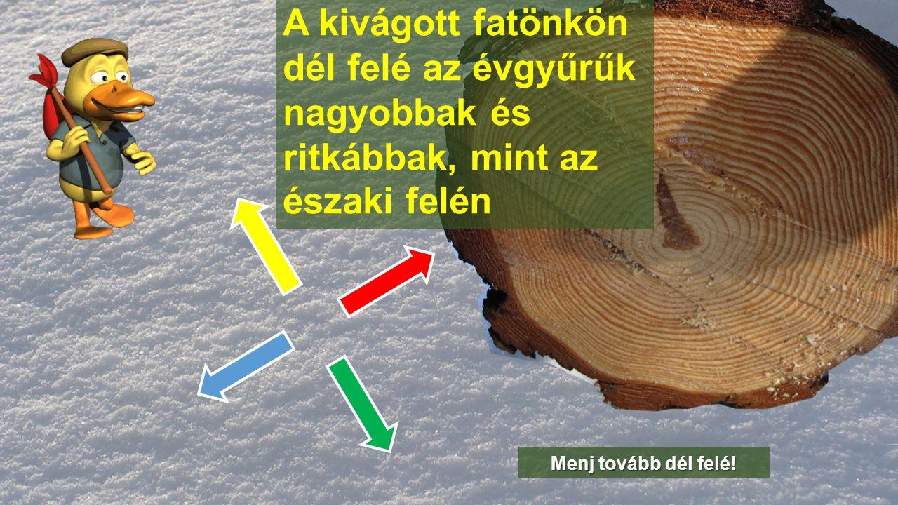 A kivágott fatönkön dél felé az évgyűrűk nagyobbak és ritkábbak, mint az északi felén