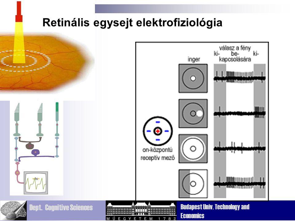 Retinális egysejt elektrofiziológia