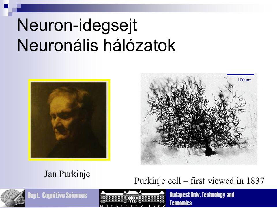Neuron-idegsejt Neuronális hálózatok