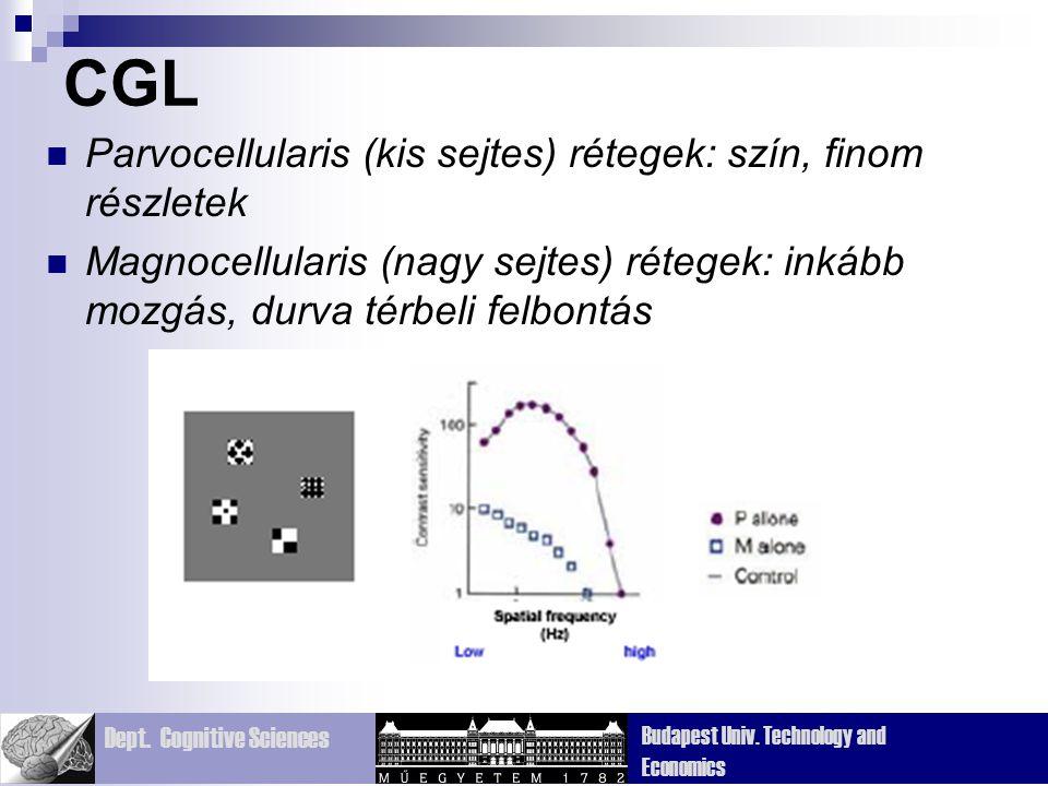 CGL Parvocellularis (kis sejtes) rétegek: szín, finom részletek