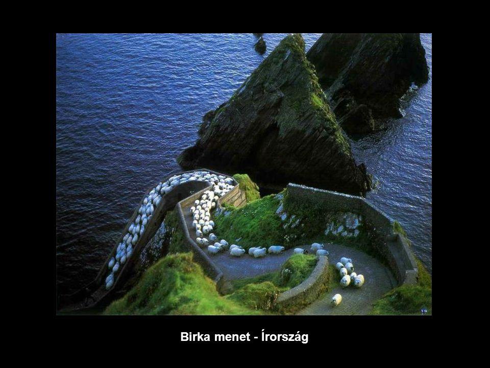 Birka menet - Írország