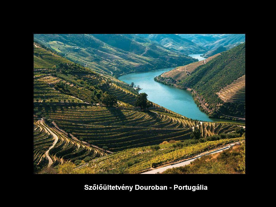 Szőlőültetvény Douroban - Portugália