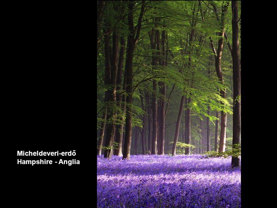Micheldeveri-erdő Hampshire - Anglia