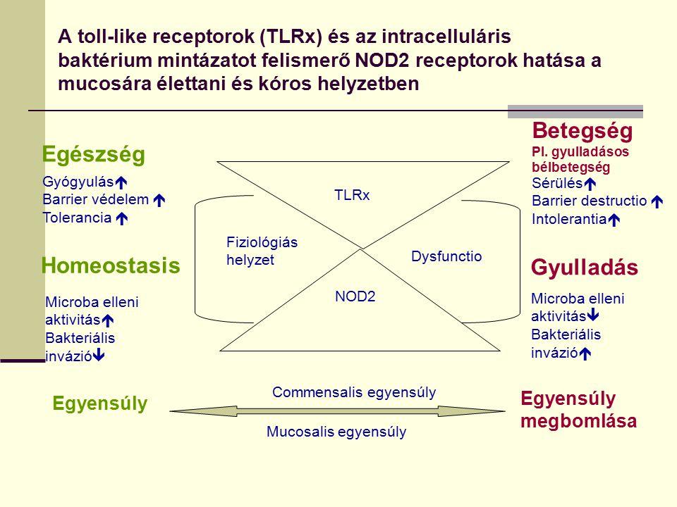Betegség Egészség Homeostasis Gyulladás