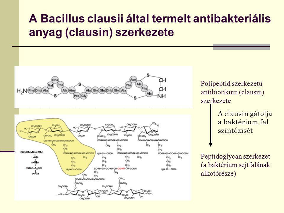 A Bacillus clausii által termelt antibakteriális anyag (clausin) szerkezete