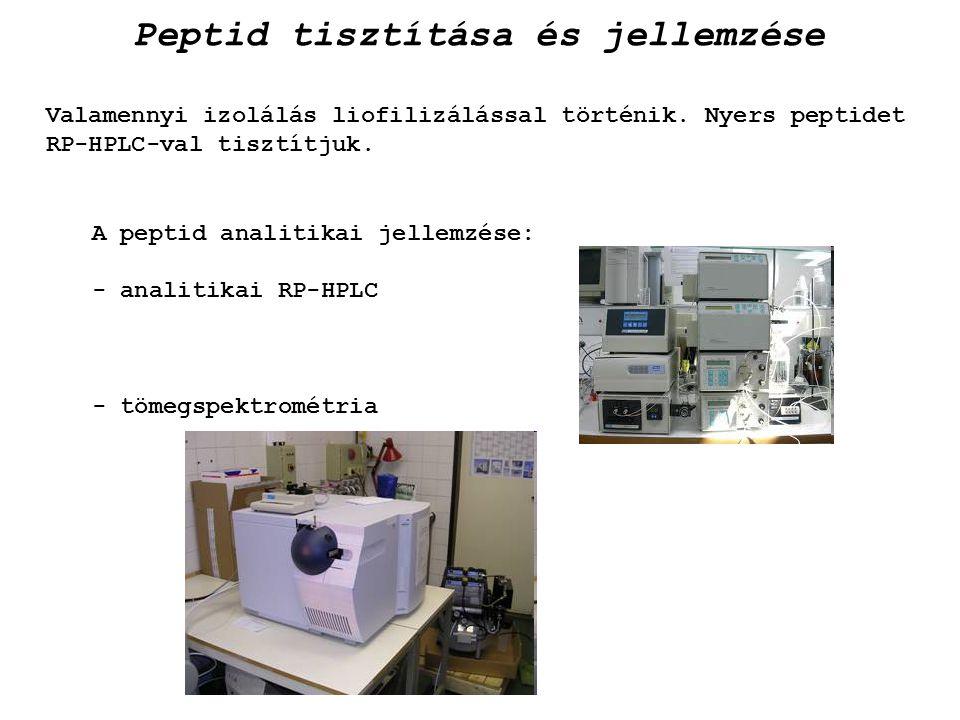 Peptid tisztítása és jellemzése
