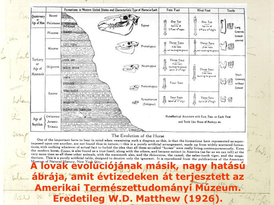 A lovak evolúciójának másik, nagy hatású ábrája, amit évtizedeken át terjesztett az Amerikai Természettudományi Múzeum.