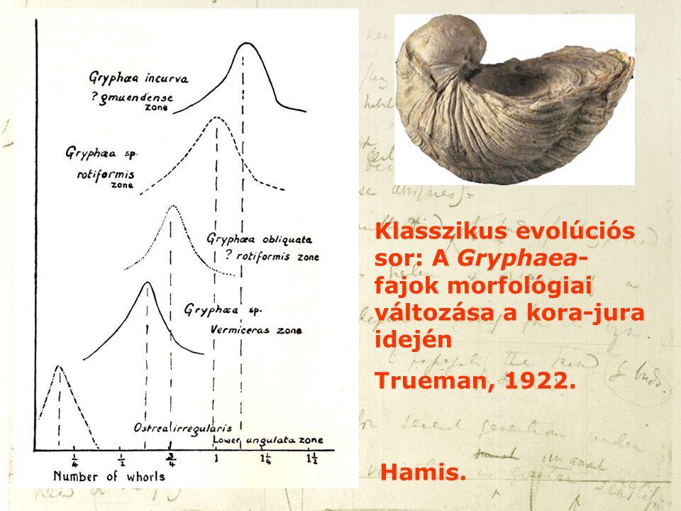 Klasszikus evolúciós sor: A Gryphaea-fajok morfológiai változása a kora-jura idején