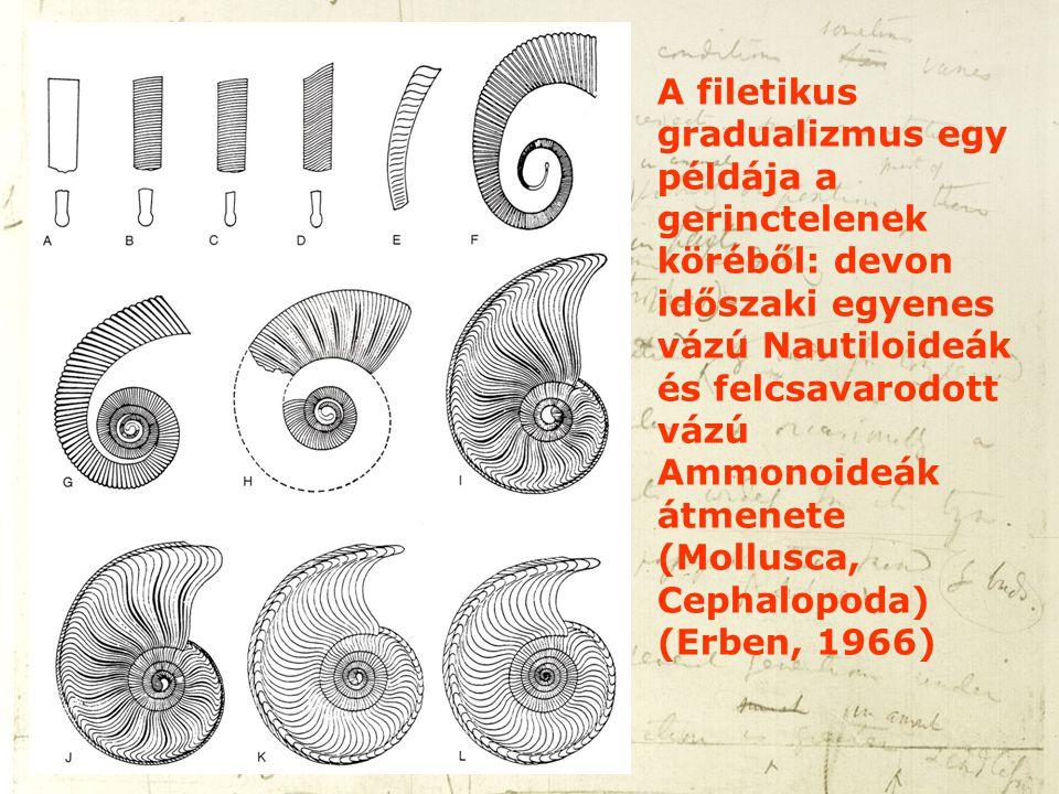 A filetikus gradualizmus egy példája a gerinctelenek köréből: devon időszaki egyenes vázú Nautiloideák és felcsavarodott vázú Ammonoideák átmenete (Mollusca, Cephalopoda) (Erben, 1966)